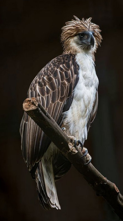 Full body photo of Philippine Eagle at rest