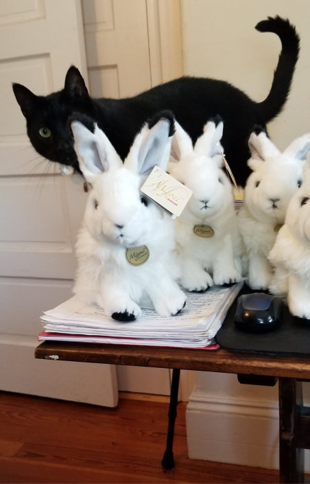 Gus and Arctic Hares